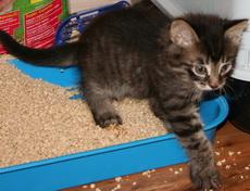 Остановить диарею у кота