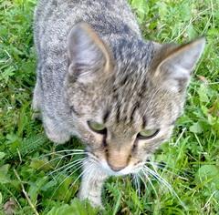 Болят ли лапы и суставы при болезни почек у кота операция суставов тбс