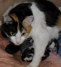 Роды у кошки: признаки начала и процесс родов