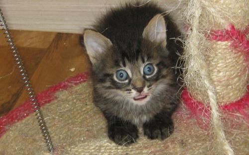 Темненький котенок - интересный фотоснимок