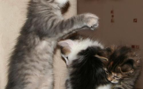 Красивые котята - красивая фотка