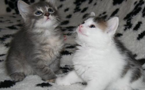 Котята на пледе - удачный фотоснимок