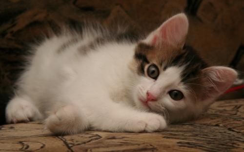 Красивый котенок - супер фото