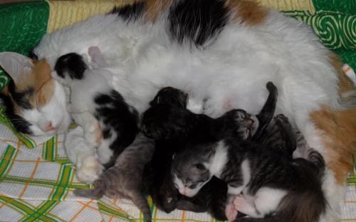 Фотоснимок: котята спят и едят