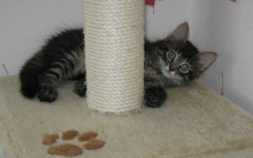 Котенок табби лежит на когтеточке - красивое фото