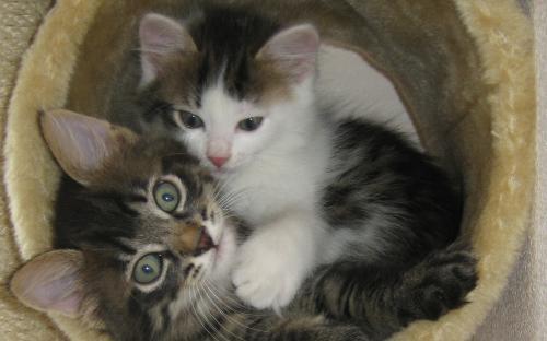 Фотография: котята в когтеточке