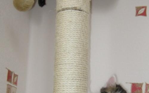 Котята на когтеточке