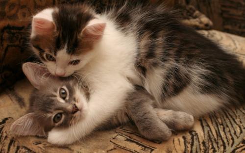 Милые котята обнимаются: фотоснимок