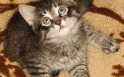 Котенок на пледе