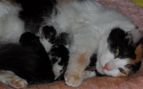 Фотоснимок: кошка с котятами отдыхает посде родов