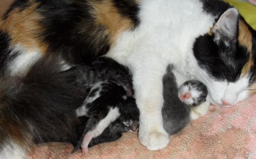 Кошка с котятами отдыхает посде родов