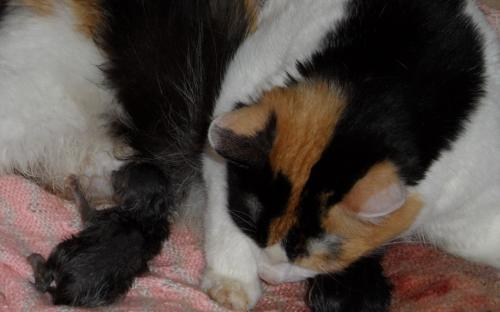 Кошка с котятками