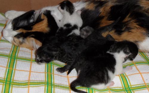 Кошка с котятами - прикольное фото